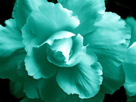 framed floral prints teal green begonia floral photograph by jennie schell