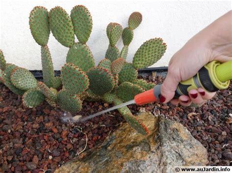 l arrosage des cactus en hiver