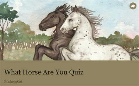 horse quiz storybird