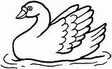 Swan Coloring Pages Print Clipart Swans Template Swimming Animals Results Templates Popular sketch template