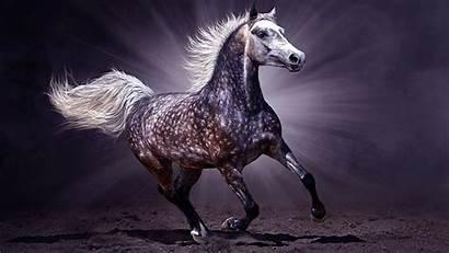 Horse Arabian Wallpapers Background Horses Dark Backgrounds