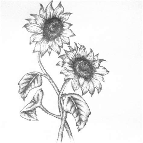 sunflower illustration black  white