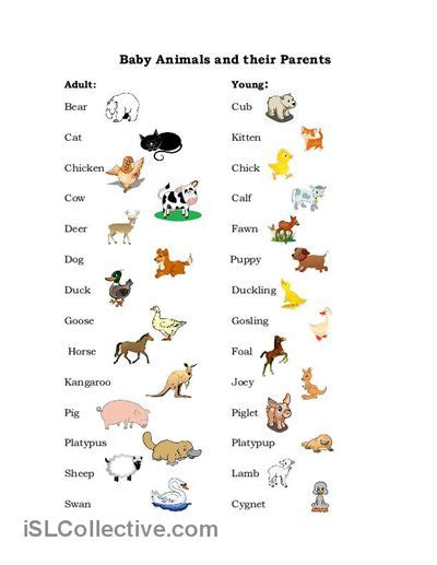baby animals names worksheet baby animals worksheet free esl printable worksheets