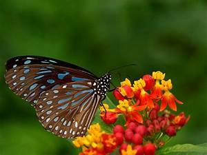 20+ Colourful Butterflies HD Wallpapers - WonderWordz