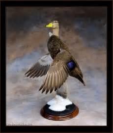 Taxidermy Waterfowl Duck Mounts