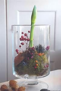 Blumenzwiebeln Im Glas : 1000 ideen zu blumenzwiebeln auf pinterest blumenzwiebeln pflanzen blumenarrangements ~ Markanthonyermac.com Haus und Dekorationen