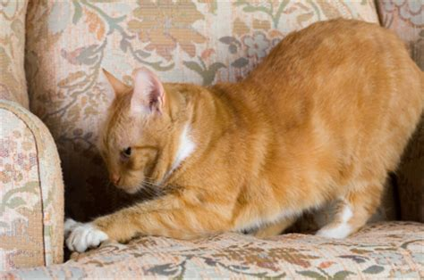 cat clawing furniture how to stop a cat clawing furniture 2015