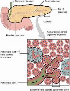 A Bit More Pancreas