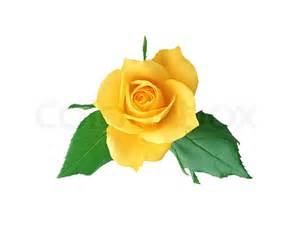 Yellow Rose Clip Art No Background