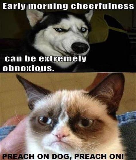 Grumpy Dog Meme - 42 best images about grumpy cat on pinterest language porcelain mugs and pets