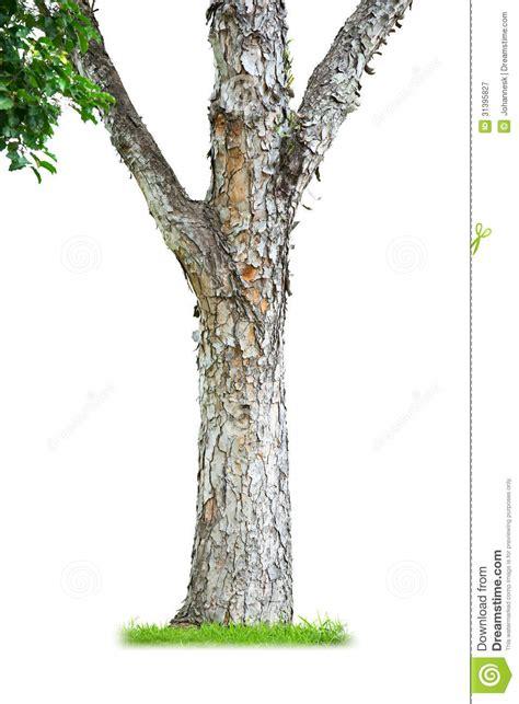 tronc d arbre photographie stock libre de droits image 31395827