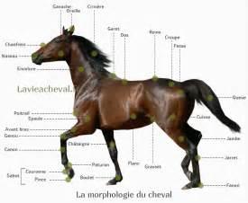 Du Cheval by La Morphologie Du Cheval La Vie 224 Cheval