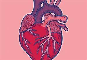 First Ips Cell Trial For Heart Disease Raises Excitement