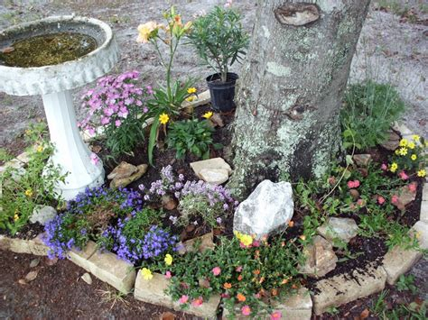 a stone garden around a tree just some flowers some rocks