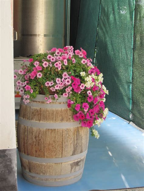 wine barrel planter ideas best 25 wine barrel planter ideas on solar
