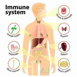 Immune System Defenses  Lesson 0404