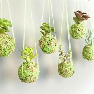 Hängende Pflanzen Für Draußen : deko aus sukkulenten 80 tolle ideen f r drinnen drau en ~ Sanjose-hotels-ca.com Haus und Dekorationen