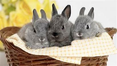 Bunnies Credit