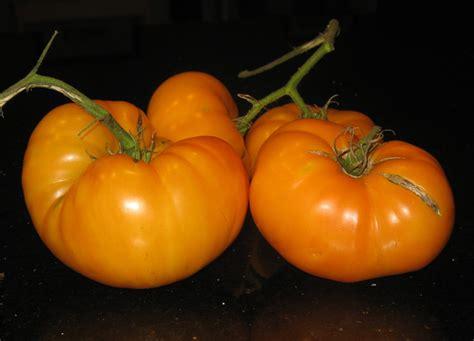 amana orange vegarden