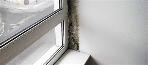 probleme moisissure chambre moisissure fenêtre la fenêtre a moisi que faire