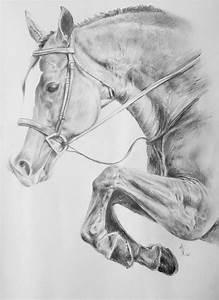 15 best horse sketches images on Pinterest | Horse sketch ...