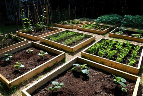 awesome ideas  backyard vegetable gardens
