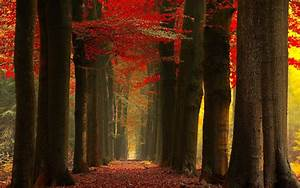 Nature, Landscape, Fall, Forest, Leaves, Red, Mist, Trees, Path, Sunlight, Wallpapers, Hd