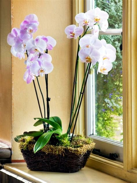 orchid care indoor tips for beautiful indoor plants orchid care interior design ideas ofdesign