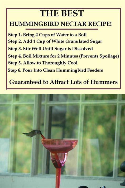 hummingbird nectar recipe    homemade