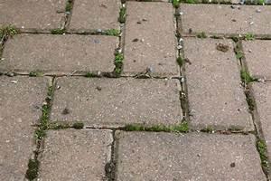 Moos Vernichten Mit Essig : 10 hausmittel gegen unkraut mit essig salz co vernichten ~ Lizthompson.info Haus und Dekorationen