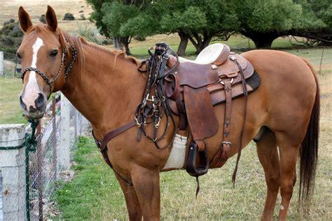 saddle horse horses saddles quarter riding texas go hay cubes pony buying guide pic shutterstock wear