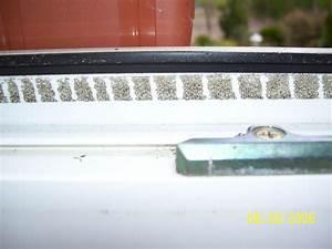 Klebereste Entfernen Fenster : klebereste von fliegengitter entfernen fliegengitter richtig putzen und fliegengitter f r t ren ~ Watch28wear.com Haus und Dekorationen