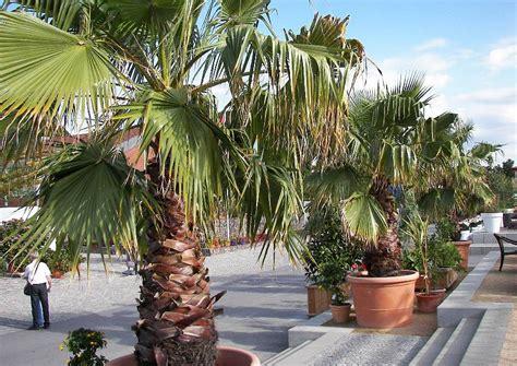 Mediterrane Kübelpflanzen Winterhart by Laga 2009 Oranienburg 107 Gestaltungsbeispiel Mediterrane