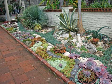 succulents outdoors how to plant an outdoor succulent garden world of succulents