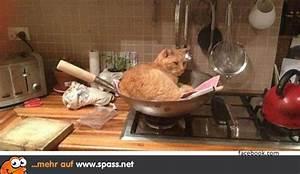 Kochen Für Katzen : f r alf kochen lustige bilder auf ~ Lizthompson.info Haus und Dekorationen