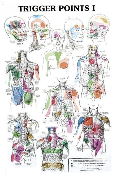 trigger points chart beautynailsface reflexology massage trigger points reflexology