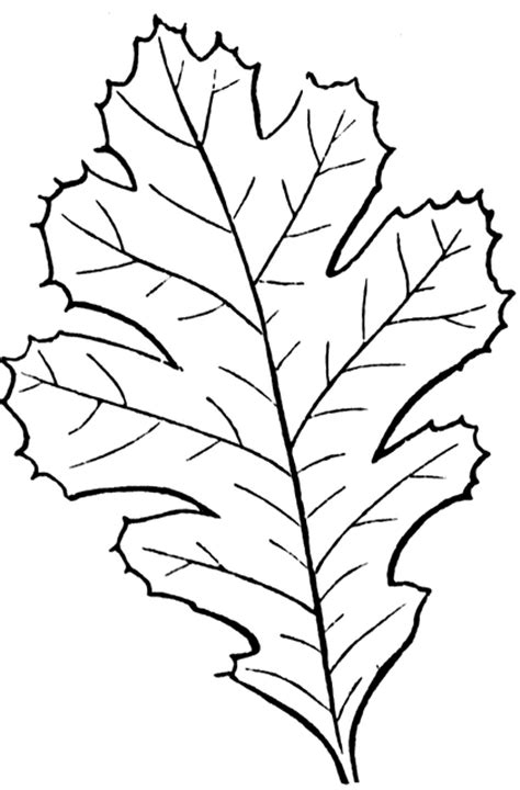 lobed leaf clipart