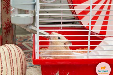 Criceto Gabbia Ideale - la gabbia ideale per il criceto a natale ferplast