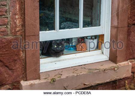 Eine Katze Sitzt Auf Dem Fenstersims Eines Der Berühmten