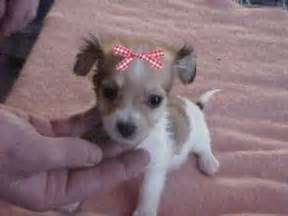 list of short haired dogs dog breeds picture