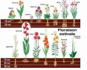 Quand Planter Des Dahlias : quand planter bulbes tulipes map titecampagne ~ Nature-et-papiers.com Idées de Décoration