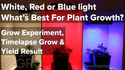 White, Red or Blue light for growing - The best colour for