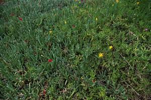 Parterre De Plante : file parterre de plantes wikimedia commons ~ Melissatoandfro.com Idées de Décoration