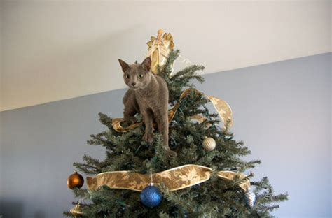12 tips for a cat safe christmas tree wells brothers pet