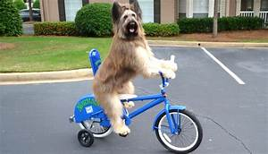 Watch This Amazing Video of Norman the Bike-Riding Dog ...