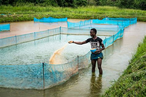 fish farming brings food  nutrition security  rural