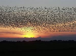 Bird Migration - The BackYard Naturalist | The BackYard ...