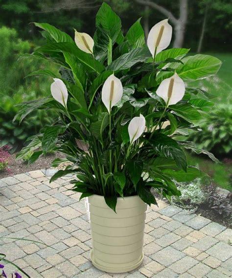 plantes vertes d int 233 rieur 40 propositions pour changer votre ambiance archzine fr