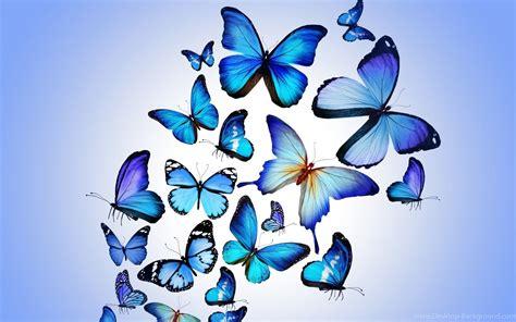 Animated Butterfly Wallpaper - hd purple animated butterfly wallpapers hd size