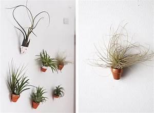 Plante Verte Salle De Bain : plantes piphytes plantes a riennes en d coration conseils d 39 entretien ~ Melissatoandfro.com Idées de Décoration